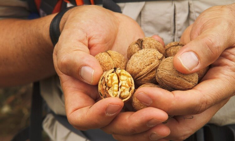 How Long To Toast Walnuts: A Quick Guide